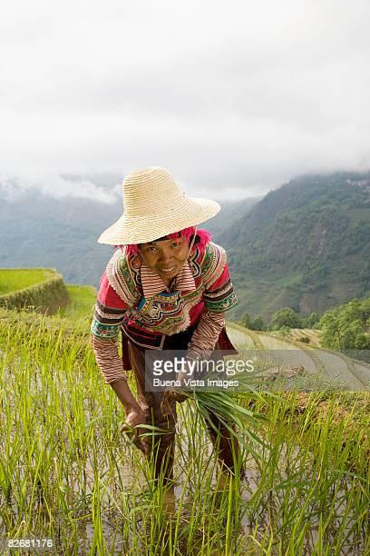China. Yunnan. Yuanyuang terraced rice fields