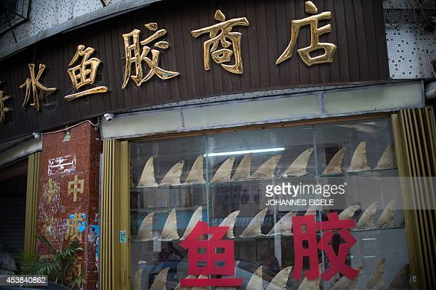 ChinaenvironmentsocialfoodeconomyFOCUS by Felicia SONMEZ This photo taken on August 9 2014 shows a shop window illustrating dried shark fins in...