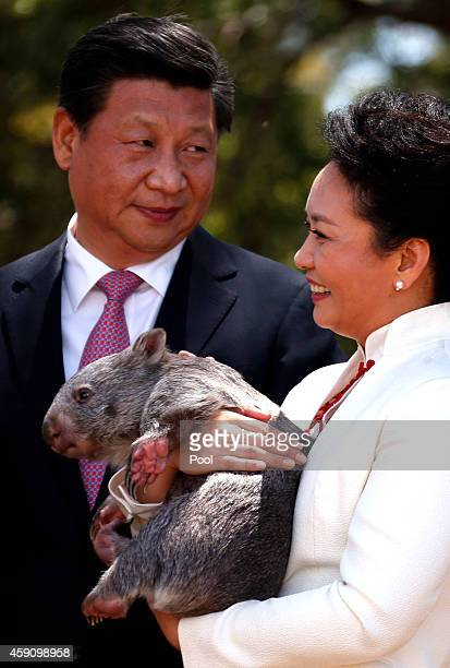China's President Xi Jinping stands next to his wife Peng Liyuan as she holds a wombat in the grounds of Government House on November 17 2014 in...