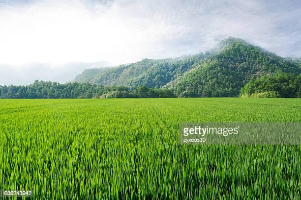 china's zhejiang province rice fields and mountains - zhejiang foto e immagini stock