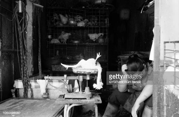 Chine juin 2002 La ville de Pékin et sa population Ici une marchande de volailles dormant à son stand