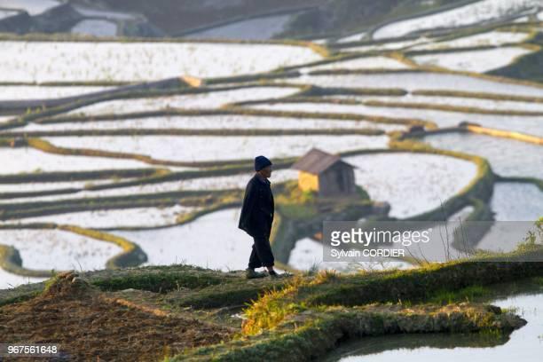 Chine province du Yunnan ethnie des Hani Yuanyang village de Azheke rizieres en terrasses paysan China Yunnan province Hani people Yuanyang Azheke...