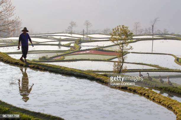 Chine province du Yunnan ethnie des Hani Yuanyang village de Azheke rizieres en terrasses paysan