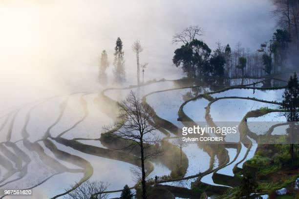 420cd53121a949 Chine province du Yunnan ethnie des Hani Yuanyang village de Duoyishu  rizieres en terrasses lever de