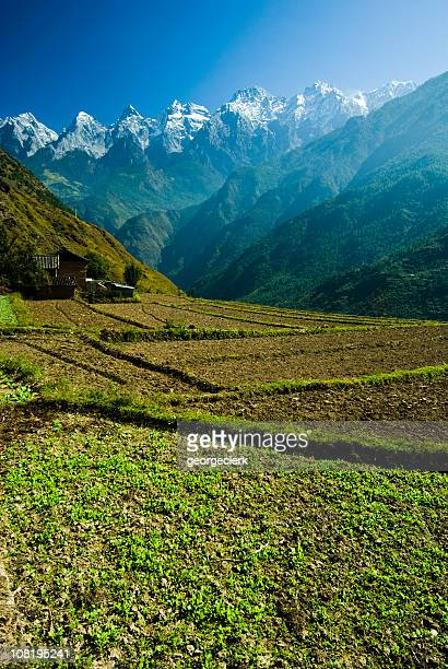 chinese agriculture in tiger leaping gorge - yunnan province stock pictures, royalty-free photos & images