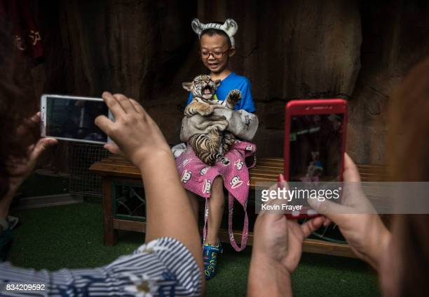 A Chinese boy wears protective gloves as he holds a baby Siberian tiger as they pose for pictures at the Heilongjiang Siberian Tiger Park on August...