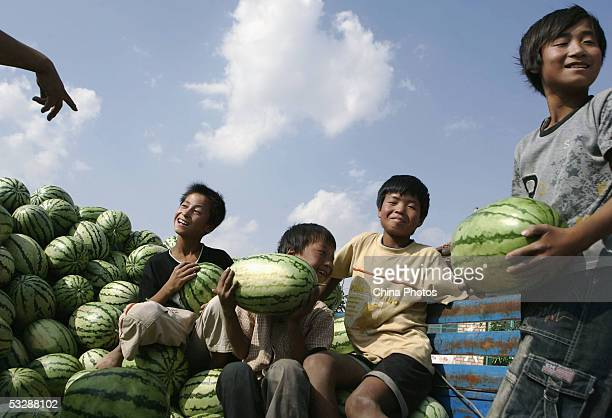 Chinese boys rest after helping their parents harvest watermelons July 24 2005 in Tongxin County Ningxia Hui Autonomous Region northwest China Many...