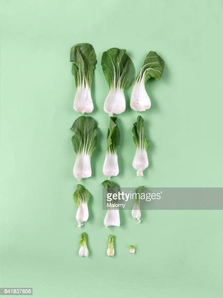 Chinese cabbage on pastel green background. Pastels. Greenery