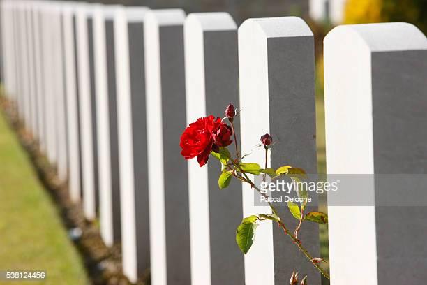 chinese cemetery in noyelles-sur-mer - túmulo - fotografias e filmes do acervo