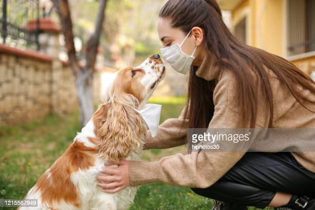 chinese coronavirus 2019-ncov dangerous for pets - domestic animals stock pictures, royalty-free photos & images