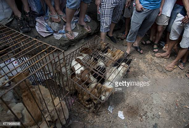 Chinese customers gather around dogs in cages on sale at a market in Yulin, in southern China's Guangxi province on June 21, 2015. The city holds an...