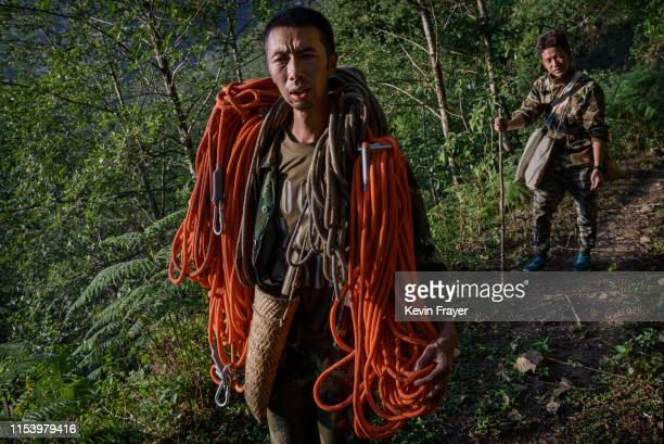 Chinese ethnic Lisu honey hunter Dong Haifa left and brother Dongwu carry gear as they walk out on a trail after gathering wild cliff honey from...