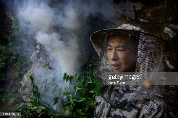 Chinese ethnic Lisu honey hunter Dong Haifa stands still to avoid being stung after making a fire to create smoke before gathering wild cliff honey...