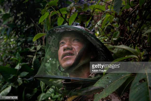 Chinese ethnic Lisu honey hunter helper Dongwu watches as others gather wild cliff honey from hives in a gorge on May 11 2019 near Mangshi in Dehong...