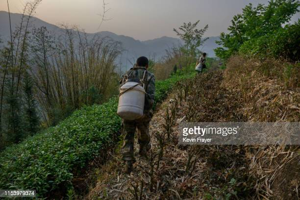 Chinese ethnic Lisu honey hunter Ma Yongde carries honey on his back after gathering wild cliff honey from hives in a gorge on May 10 2019 near...