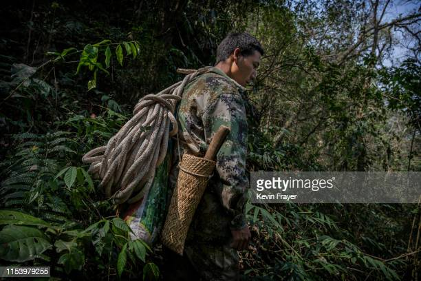 Chinese ethnic Lisu honey hunter Ma Yongde carries ropes and gear on his to gathering wild cliff honey from hives in a gorge on May 10 2019 near...