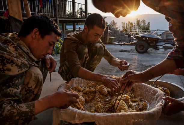 CHN: Yunnan Honey Hunters Scale Cliffs For Liquid Gold