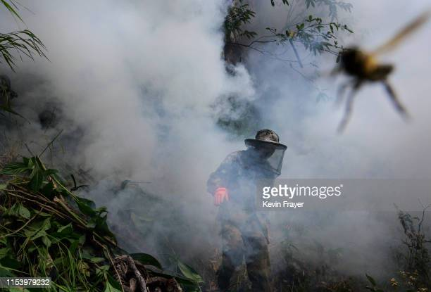 Chinese ethnic Lisu honey hunter Ma Yongde walks in smoke after making a fire before gathering wild cliff honey from hives in a gorge on May 10 2019...