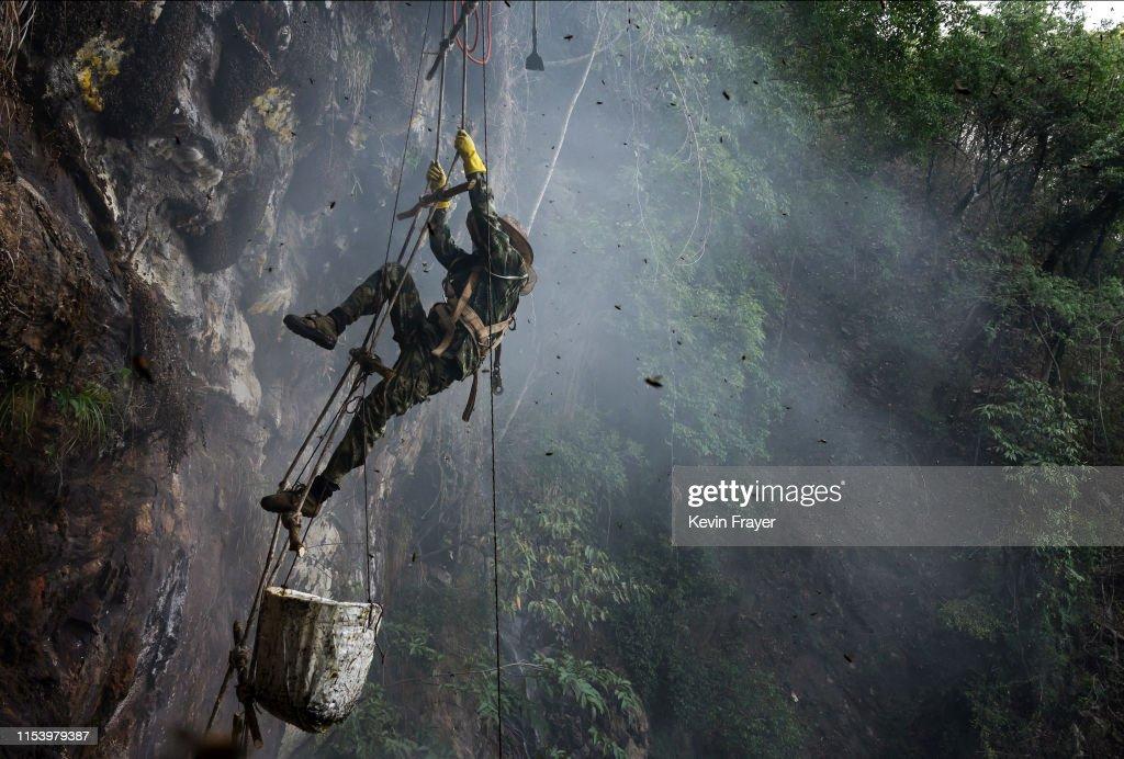 Yunnan Honey Hunters Scale Cliffs For Liquid Gold : News Photo