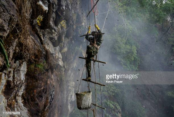 Chinese ethnic Lisu honey hunter Mi Qiaoyun is surrounded by bees as he climbs on a makeshift ladder while gathering wild cliff honey from hives in a...