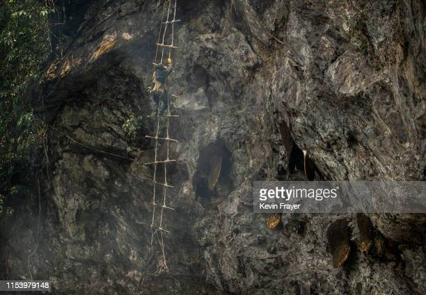 Chinese ethnic Lisu honey hunter Mi Qiaoyun stands on a makeshift rope ladder while gathering wild cliff honey from hives in a gorge on May 10 2019...