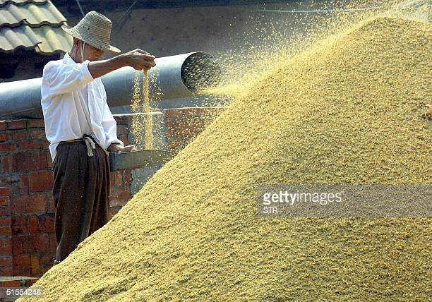 Chinese farmer checks his grains during processing at a farm in Jianli, central China's Hubei province 23 October 2004. A law which defines different...