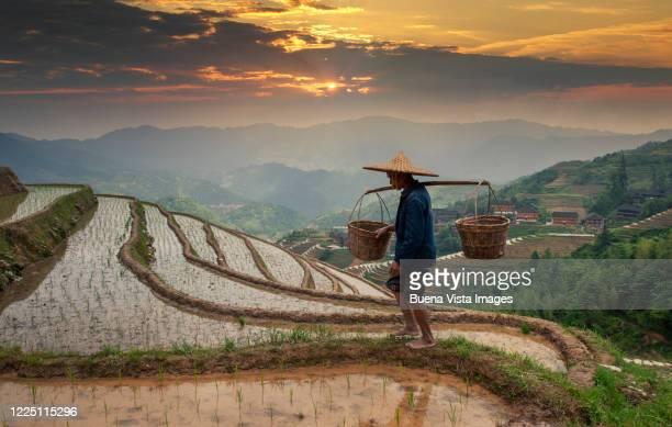 chinese farmer in rice fields - luogo d'interesse internazionale foto e immagini stock