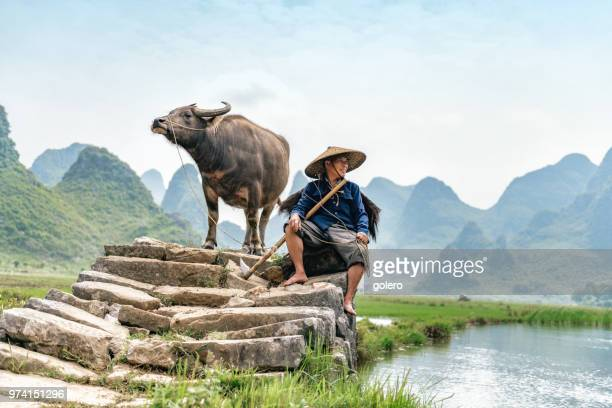 chinese farmer sitting with water buffalo on stone bridge - tradition stock pictures, royalty-free photos & images
