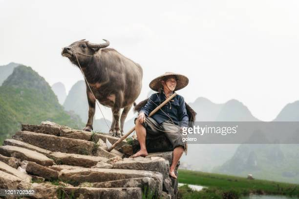 agricultor chino con búfalo de agua en puente de piedra - paisajes de china fotografías e imágenes de stock