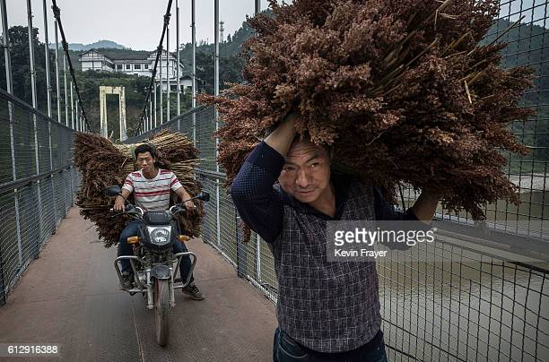 Chinese farmers transport processed sorghum grain one of the key ingredients used for locally made wine called baijiu as they walk on a bridge across...