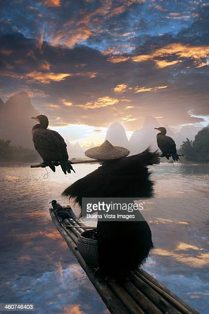 chinese fisherman with cormorant - zeevogel stockfoto's en -beelden