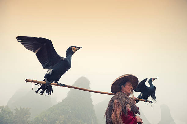 Chinese Fisherman With His Cormorants, Li river, Yangshuo, Guilin, China