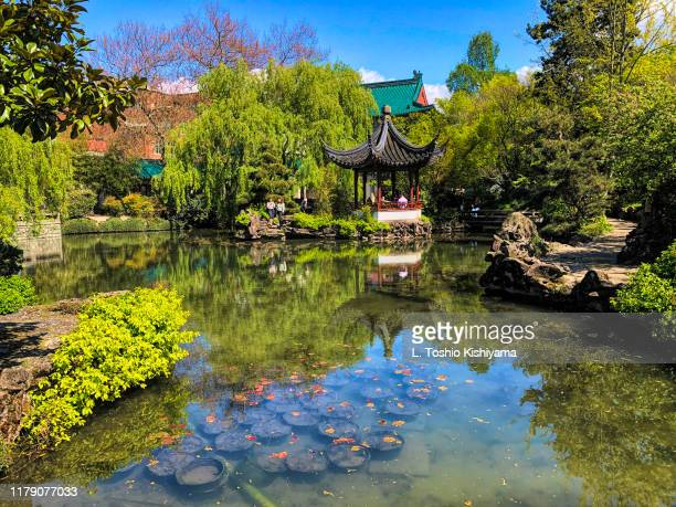 chinese garden in vancouver, canada - chinatown stock pictures, royalty-free photos & images