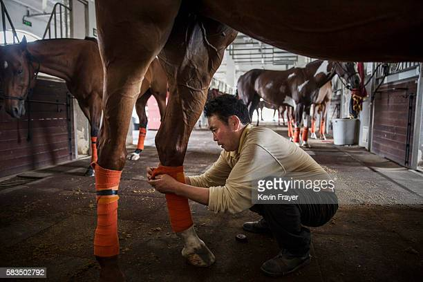 Chinese horse handler wraps the legs of a horse as he prepares them for an intervarsity match at the Tianjin Goldin Metropolitan Polo Club on July 17...