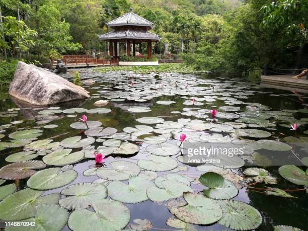 chinese house pond with pink lilys - paisajes de china fotografías e imágenes de stock