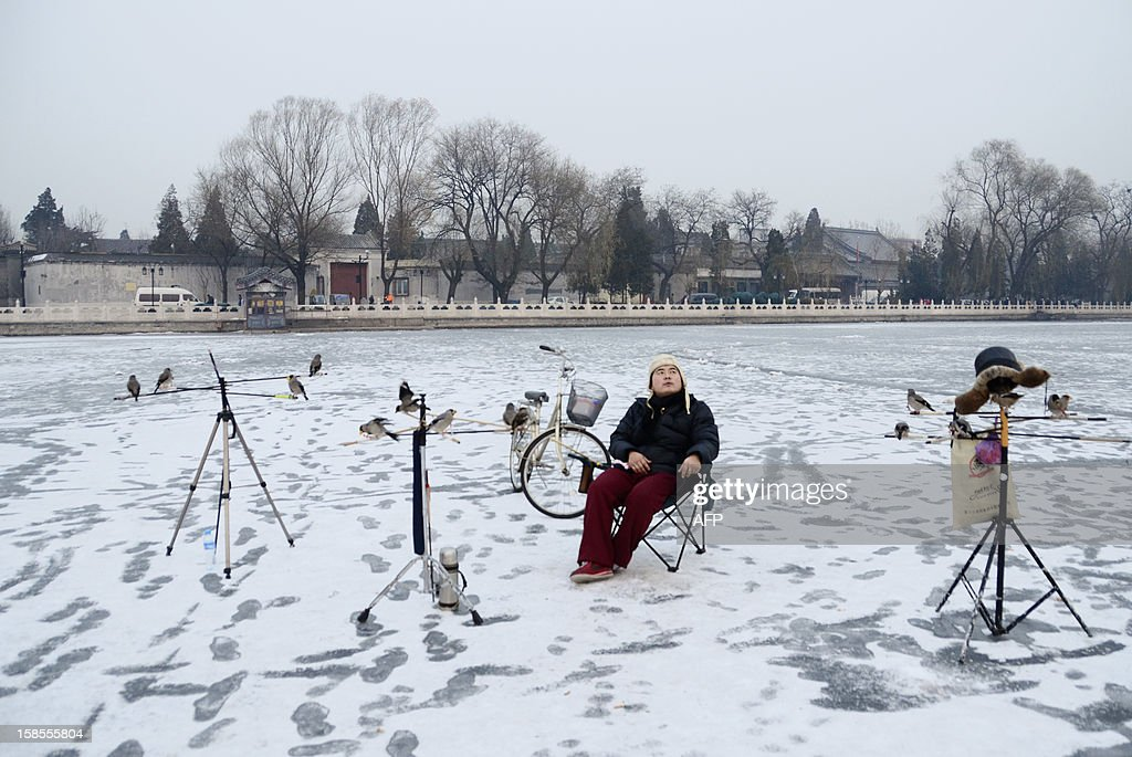A Chinese man looks on as he sits on a frozen lake with his pet birds in Beijing on December 19, 2012