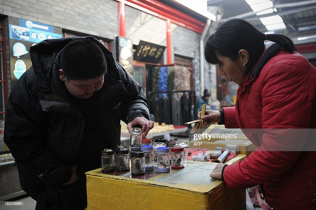 A Chinese man selects a Katydid, an insect also known as bush-crickets, at a market in Beijing on February 21, 2013. Raising Katydid is a tranditional hobby in the capital and dates back from Qing dynasty.