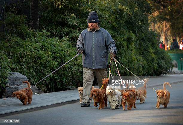 A Chinese man who supplements his income by walking dogs around the Houhai Lake area of Beijing on December 11 2012 Dog ownership is popular amongst...
