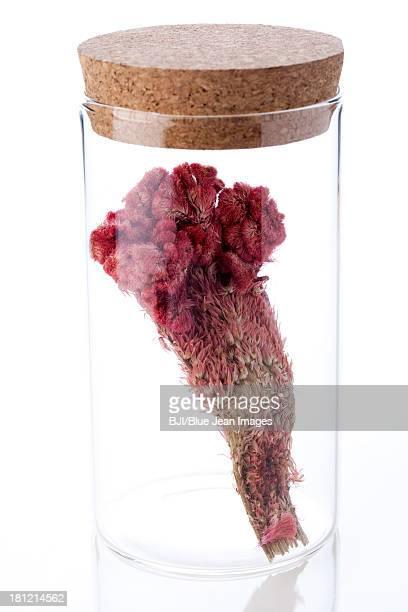 chinese medicinal herb cockscomb in glass bottle - cockscomb plant - fotografias e filmes do acervo