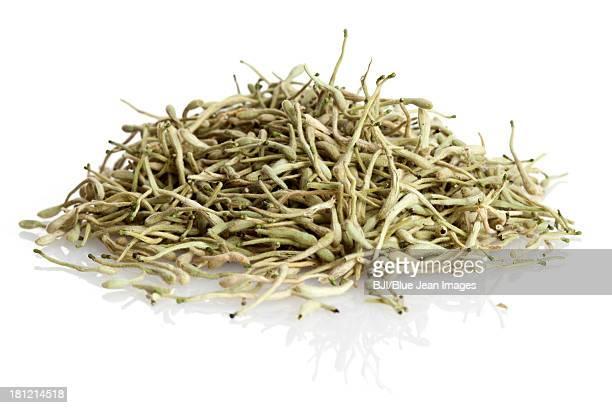 Chinese medicinal herb honeysuckles