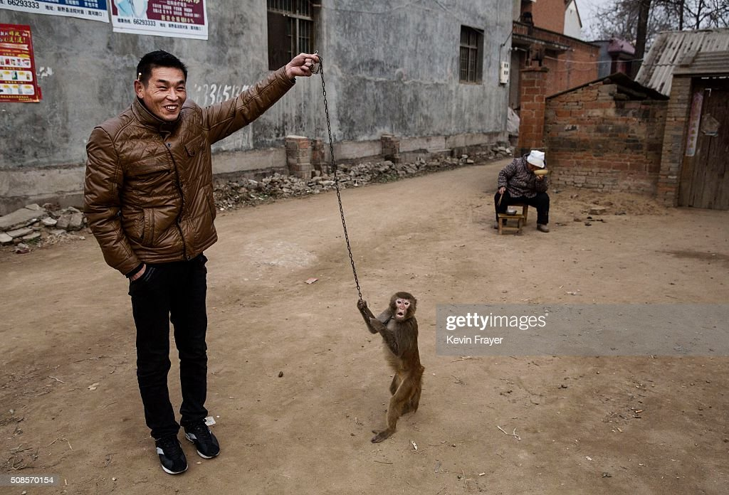 Chinese New Year Boosts Monkey Business for Villagers : News Photo