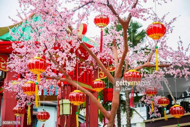 Chinese New Year lanterns on flowering tree