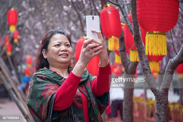 chinese new year - peach blossom stock pictures, royalty-free photos & images