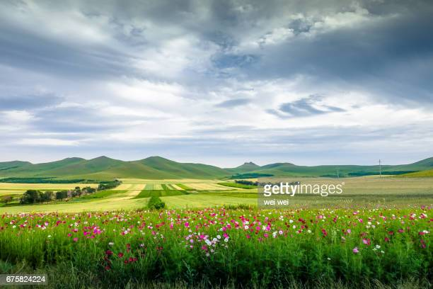 chinese pastoral scenery - prairie stock pictures, royalty-free photos & images