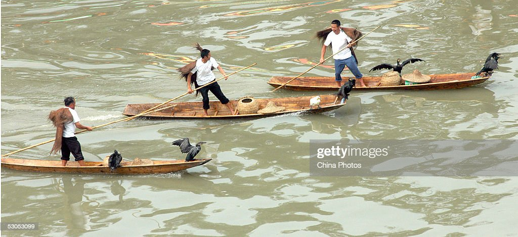 Chinese people row boats carrying cormorants during a re-enactment of ancient fishing to mark the Dragon Boat Festival June 11, 2005 in Chengdu of Sichuan Province, China. The Dragon Boat Festival is celebrated throughout China with activities such as boat races and the eating of sticky rice dumplings known as the 'zongzi.' The festival falls on the fifth day of the fifth month on the Chinese lunar calendar, in remembrance of Qu Yuan, a patriotic poet who committed suicide in the Miluo River on the day in 221 BC.
