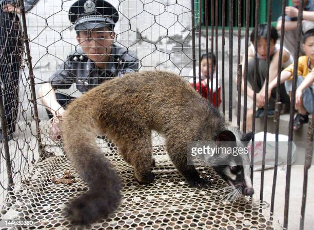 A Chinese policeman watches over a civet cat captured in the wild by a farmer in Wuhan central China's Hubei province 26 May 2003 The Severe Acute...