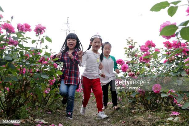 Chinese roses are in full bloom at Mapeng village Tonglu county China's Zhejiang province 30 April 2018 Many people visit flowers during the May Day...