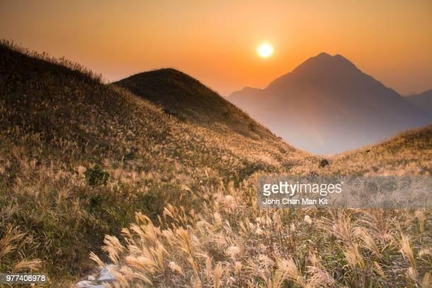 chinese silver grass (miscanthus sinensis) growing on hillsides at sunset, lantau island, hong kong - lantau stock pictures, royalty-free photos & images