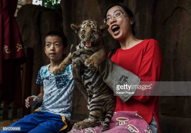 A Chinese tourist wears protective gloves as she holds a baby Siberian tiger as they pose for pictures at the Heilongjiang Siberian Tiger Park on...