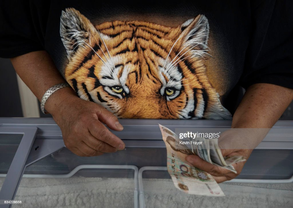 A Chinese vendor wears a shirt as she sells ice cream at the Heilongjiang Siberian Tiger Park on August 16, 2017 in Harbin, northern China. The center is one of two Siberian tiger parks in the Chinese province of Heilongjiang, about 500 kilometers (300 miles) from the border with Russia. It is considered the world's largest for breeding the Siberian, or Amur, tiger which is listed as endangered by the World Wildlife Federation. As many as 540 are known to exist. The Harbin center opened in 1986 and claims an 80-percent survival rate among the 100 or so cubs born in captivity every year, though a government plan reveals it could be another decade before the program actually releases a tiger to the wild. In 1996, it opened to the public as a commercial park allowing tourists on safari buses to view its 600 tigers in an open range area meant to simulate their natural habitat. Customers pay extra to throw live chickens or ducks to the tigers to eat, or to hold a tiger cub. Critics regard the park as a large-scale breeding farm, where tigers are kept in unnatural conditions and unable to hunt to survive. Despite a longstanding government directive, some facilities in China have been accused of trading products made from tiger parts, including 'wine' made by soaking tiger bones in alcohol. The park divides the tigers among different areas in the park according to age and seniority, and cubs begin 'wilderness training' when they are three to four months old. Wildlife experts say inbreeding and natural habitat destruction pose the greatest risk to the Siberian or Amur tiger subspecies.